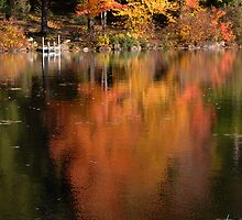 Maple Reflections by Susan R. Wacker