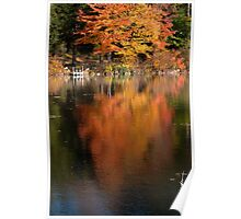 Maple Reflections Poster