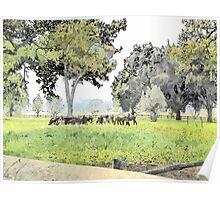 Grazing cows Poster