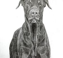 Dobermann ( brown) by Istvan Natart