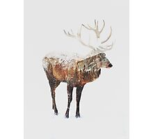 Arctic Deer  Photographic Print