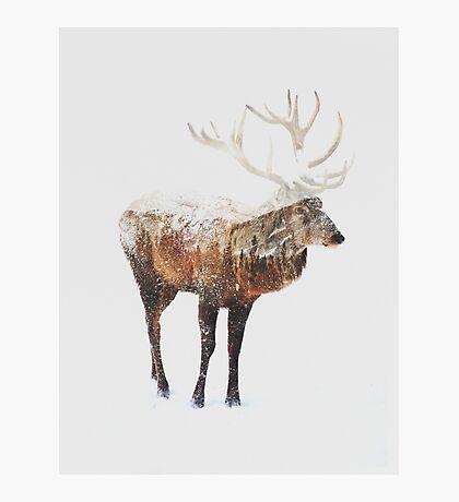 Arctic Deer  Photographic Print