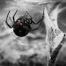Black Widow by fixtape