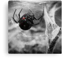 Black Widow Canvas Print