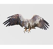 Arctic Eagle Photographic Print