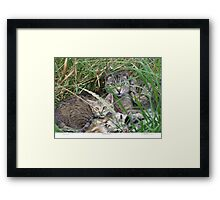 Mother & Kittens Framed Print