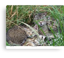 Mother & Kittens Canvas Print