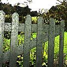Creaky Garden Gate by sarnia2