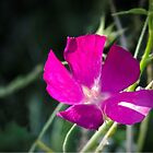 A Wildflower along the walk by LarryB007