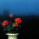 geranium by codswollop