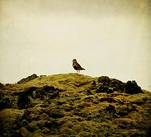 solitude by Daphne Kotsiani