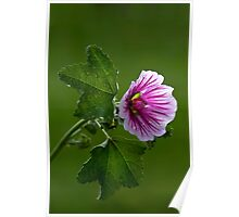 Feeling Mallow After the Rain Poster