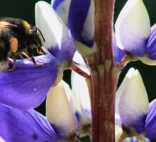 Bee on the delphinium Sticker