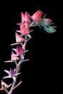 Desert Flowers at Night by Adam Bykowski