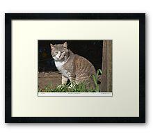 Tabby-Tux Feral Tomcat Framed Print