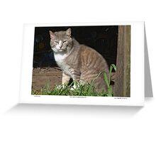 Tabby-Tux Feral Tomcat Greeting Card