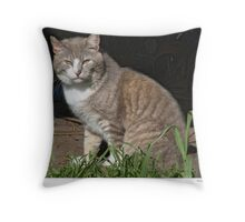 Tabby-Tux Feral Tomcat Throw Pillow
