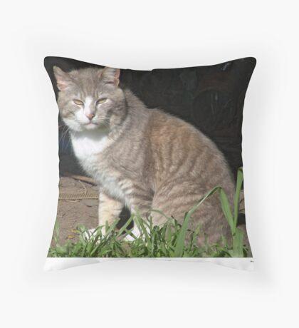 Tabby-Tux Feral Tomcat Throw Pillow