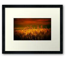 Winds of Harvest Framed Print