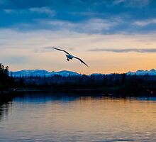 Peaceful Evening by ChrissyImages