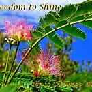 Freedom To Shine Banner by Rinaldo Di Battista