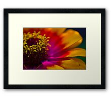 In the Community Garden Framed Print