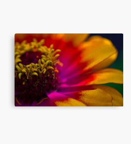 In the Community Garden Canvas Print