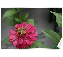 Hummingbird hawk moth Poster