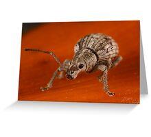 small Weevil Beetle Greeting Card