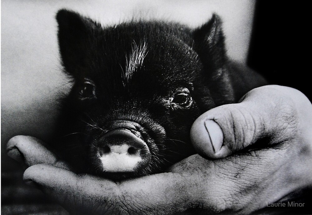 """""""Piglet in Palm"""" by Laurie Minor"""