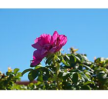 Reaching for the Sun!!!! Photographic Print