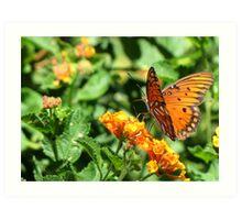 Butterfly ~ Gulf Fritillary Art Print