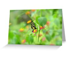 """ Giant Glasswing "" Greeting Card"