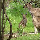 EARS LIKE TISSUE PAPER! Joey with Mum. by Rita Blom