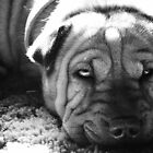 Wrinkle Face by Teresa Young