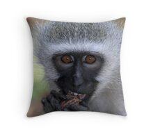 Vervet monkey enjoying his food Throw Pillow