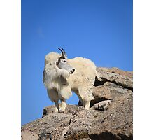 This is my best side - Mt Evans Photographic Print