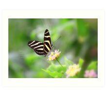 """ Zebra Longwing "" Art Print"