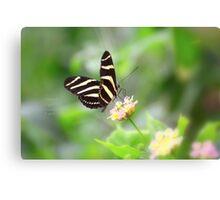 """ Zebra Longwing "" Canvas Print"