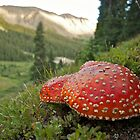 Mountain Mushrooms by bberwyn