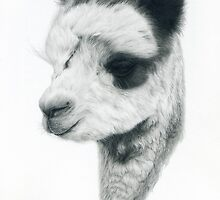 Little Alpaca by Nori Bucci