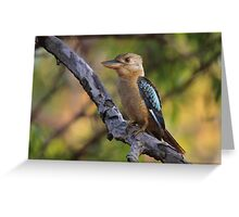 Kookaburra Sittin' In An Old Gum Tree Greeting Card