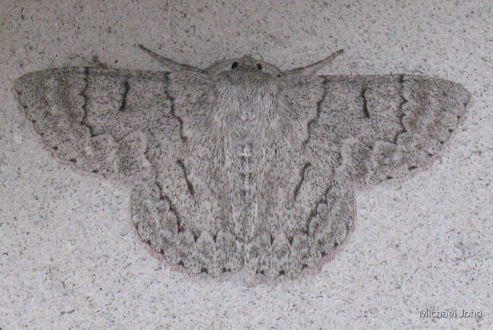Spot the Moth by Michael John