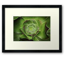 Green Aeonium Framed Print