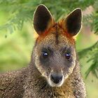 Julia - an Australian redhead wallaby by Pauline Andrews