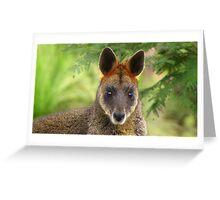 Julia - an Australian redhead wallaby Greeting Card