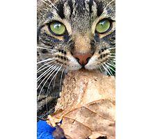 leaf munchin Photographic Print
