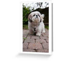 Yoshi the shih tzu Greeting Card
