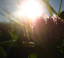 Flower and Sun in Devils Lake by Dillon Soma