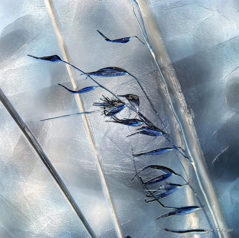 Blue Grass by Igor Shrayer